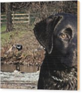 Where's The Geese Labrador 4 Wood Print