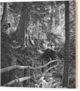 Whidbey Island Trail Head Wood Print
