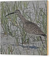 Whimbrel Wood Print