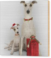 Whippet Christmas Wood Print by John Clum