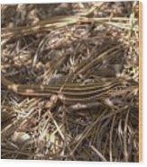 Whiptail Lizard Wood Print