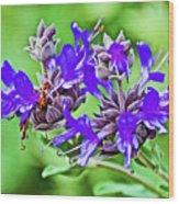 Whirly Bird Salvia In Rancho Santa Ana Botanic Garden In Claremont-california Wood Print