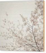 Whisper - Spring Blossoms - Central Park Wood Print