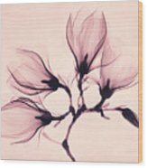 Whisper Magnolia Wood Print