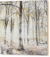 Whispering Woodland In Autumn Fall Wood Print
