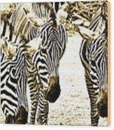 Whispering Zebras Wood Print
