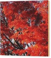 Whispers Of A Japanese Maple Wood Print