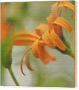 Whispers Of Orange Symphony Wood Print