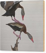 Whistling Duck Ballet  Wood Print