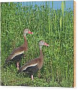 Whistling Ducks Wood Print