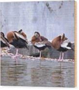Whistling Ducks Grooming Wood Print