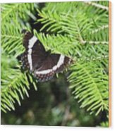 White Admiral On Tree Wood Print