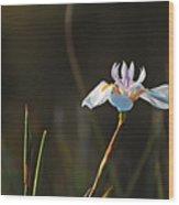 White African Iris Wood Print