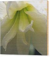 White Amarillys Close Up Wood Print