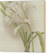 White Amaryllis   Ismene Andreana Wood Print