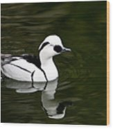 White And Black Duck Wood Print