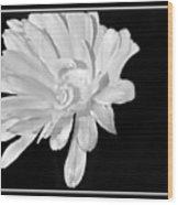 White And Black Flower Painting Wood Print