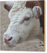 White And Brown Heifer Dairy Cow Wood Print