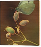 White And Green Butterfly On Dried Flowers Wood Print