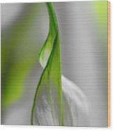 White And Green Wood Print