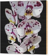 White And Magenta Orchids Wood Print