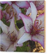 White And Pink Lilies Wood Print