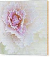White And Pink Ornamental Kale Wood Print