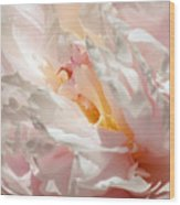 White And Pink Peony 3 Wood Print