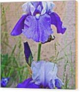 White And Purple Irises At Pilgrim Place In Claremont-california- Wood Print
