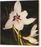 White And Purple Lily Wood Print