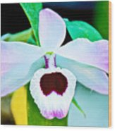 White And Purple Orchid In Greenhouse At Pilgrim Place In Claremont-california Wood Print