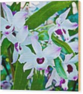 White And Purple Orchids In Greenhouse At Pilgrim Place In Claremont-california Wood Print