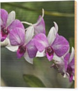 White And Purple Orchids Wood Print