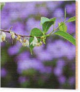 White And Purple Spring Wood Print