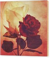 White And Red Roses Wood Print