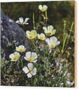 White And Yellow Poppies 1 Wood Print