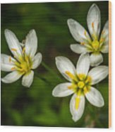 White And Yellow Wild Flowers Wood Print
