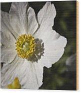 White Anemone Wood Print