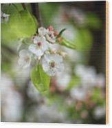 White Apple Flowers Wood Print