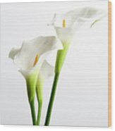 White Arums Wood Print
