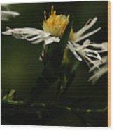 White Aster Wood Print