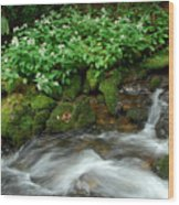 White Asters Along Palmer Branch Wood Print