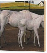 White Baby Horse Wood Print