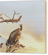 White-backed Vulture Wood Print