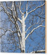 White Bark Wood Print