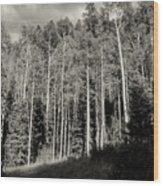 White-barked Birch Forest 3 Wood Print