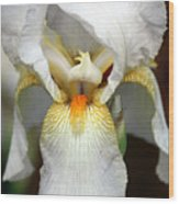 White Bearded Iris 2 Wood Print