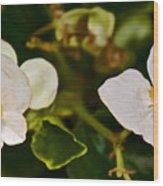White Begonias At Pilgrim Place In Claremont-california Wood Print