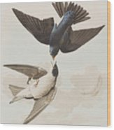 White-bellied Swallow Wood Print