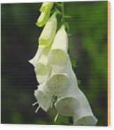 White Bells Wood Print